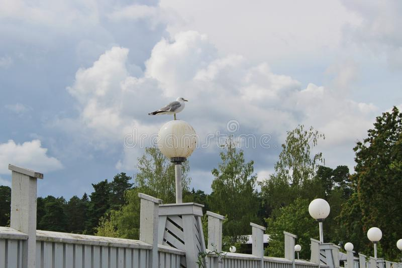 在一条腿的海鸥在街灯 卡尔斯塔德,瑞典 免版税库存图片