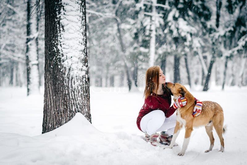 在一条褐红的毛线衣和白色裤子打扮的美女在红色狗旁边坐下了反对积雪的树干背景  免版税库存照片