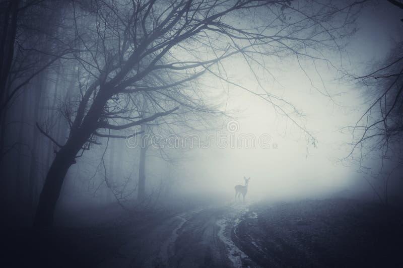 在一条路的鹿在雨以后的一个黑暗的森林里 库存图片