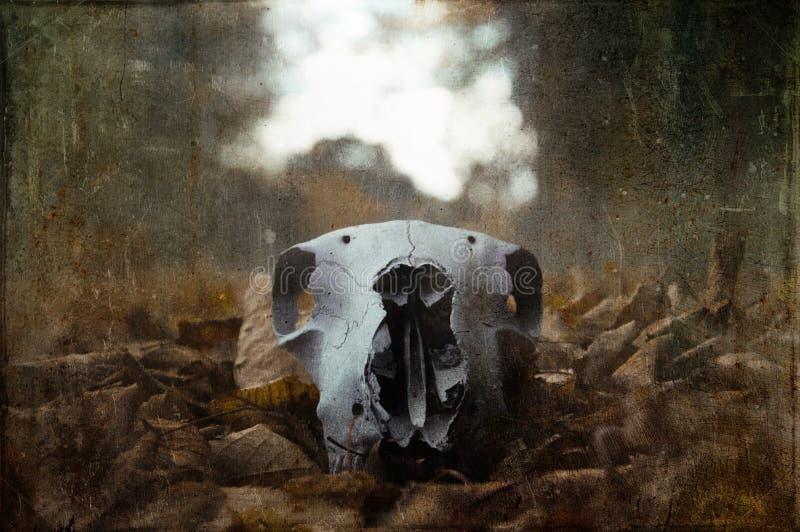 在一条道路的一块可怕绵羊头骨在木头在冬天 减弱的声音,难看的东西,葡萄酒编辑 免版税库存图片