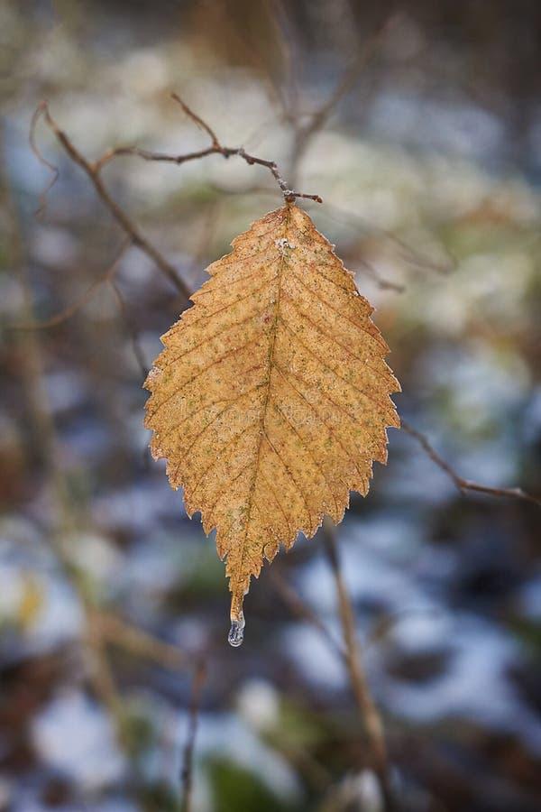 在一条道路的秋叶在森林里 免版税库存图片