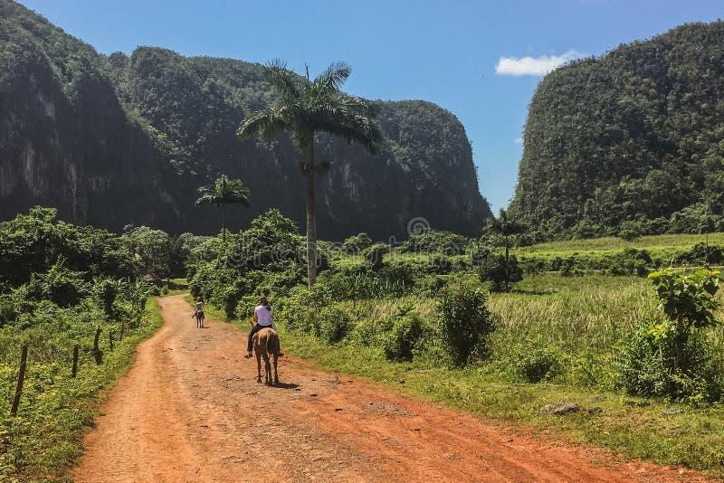 在一条道路的马后面骑马在热带 库存图片