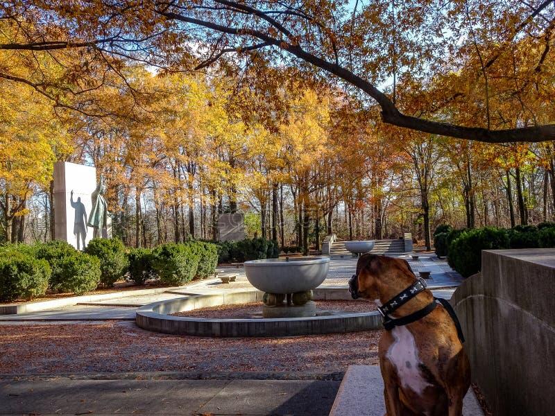 在一条长凳的狗在秋天 免版税库存照片
