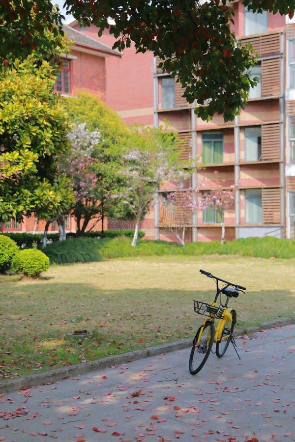 在一条高中路的一辆共有的黄色自行车在一棵树下本质上 库存图片
