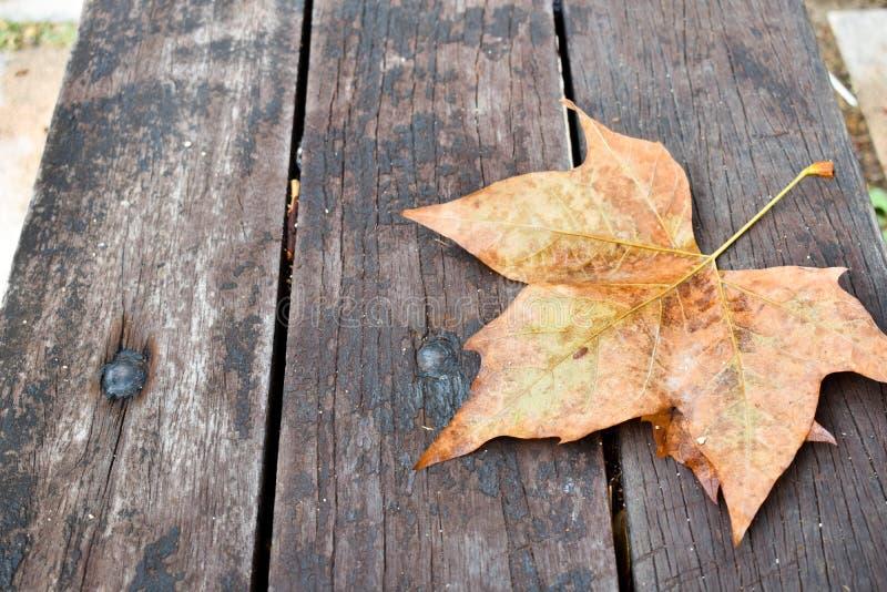 在一条黑褐色长凳的一片干燥新鲜的棕色叶子在一天秋天 叶子是单独的,并且没人坐长凳 长凳被做  库存照片