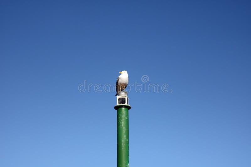 在一根绿色杆的唯一海鸥 免版税库存图片