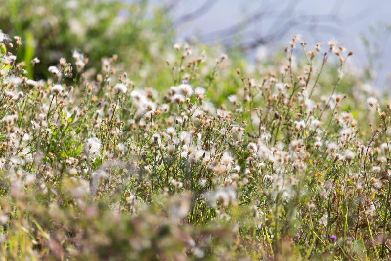 在一棵多刺的植物的花 免版税图库摄影