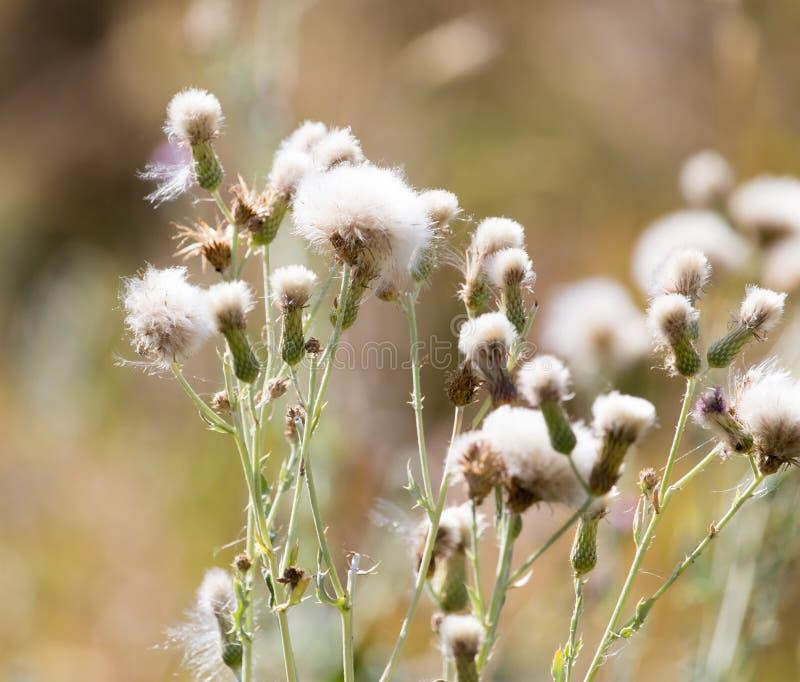 在一棵多刺的植物的花 库存图片