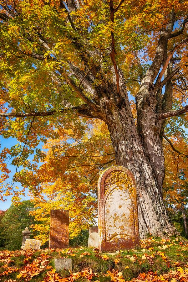 在一棵大树旁边的老墓碑在秋天公墓 免版税库存图片