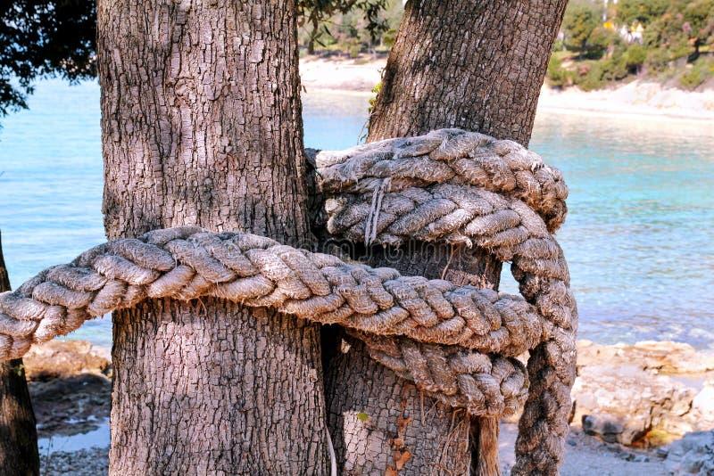 女孩被栓大树5年_在一棵大树的一条被打结的绳索