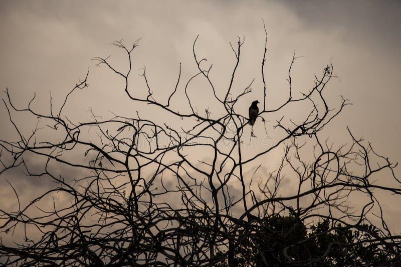 在一棵干燥树的鸟与云彩在背景中 免版税库存图片