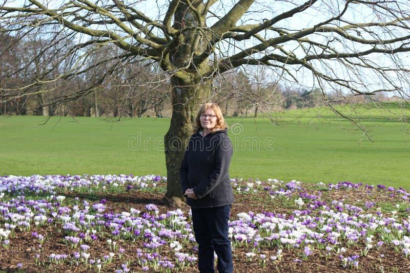 在一棵树旁边的妇女与大量开花的番红花在基尔肯尼爱尔兰开花,一个公园 库存图片