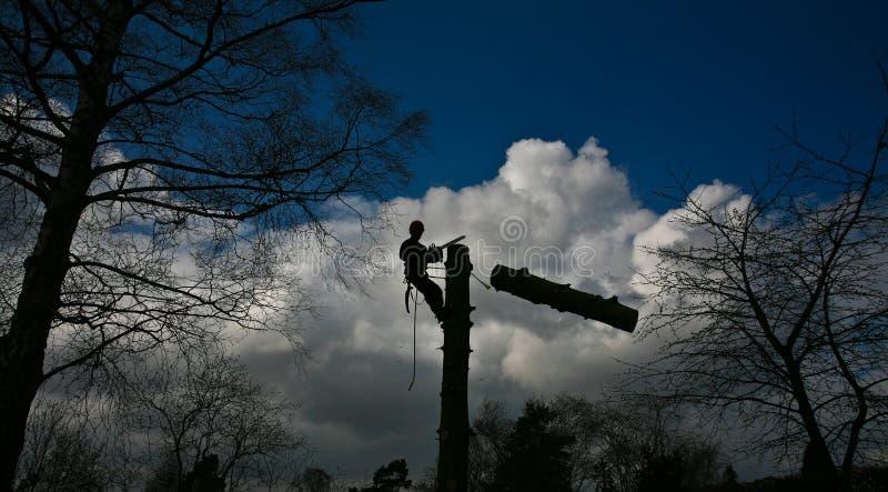 在一棵树的上面的伐木工人剪影在行动的在丹麦 免版税图库摄影