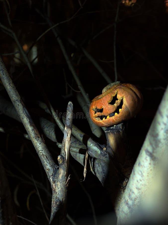在一棵树的分支的中一个可怕微笑的南瓜在晚上 免版税图库摄影