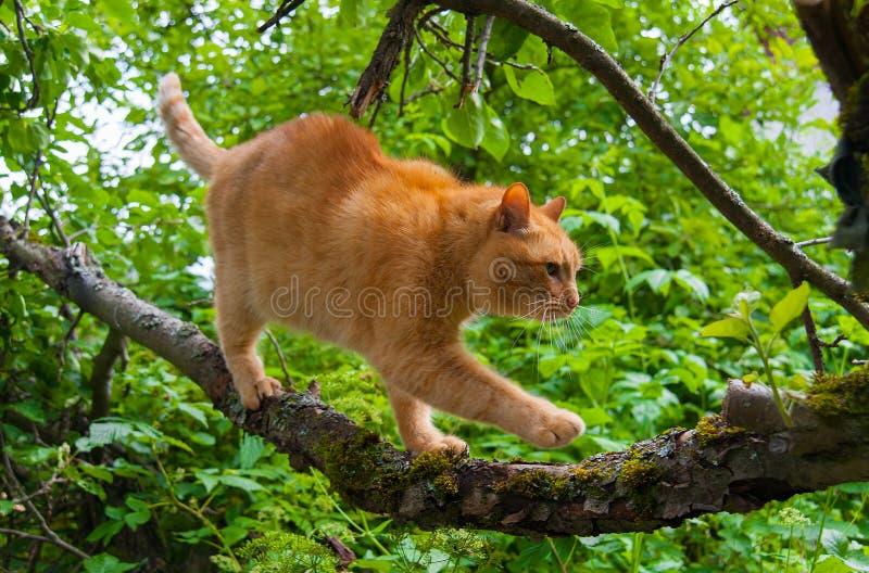 在一棵树的猫在夏天 库存照片