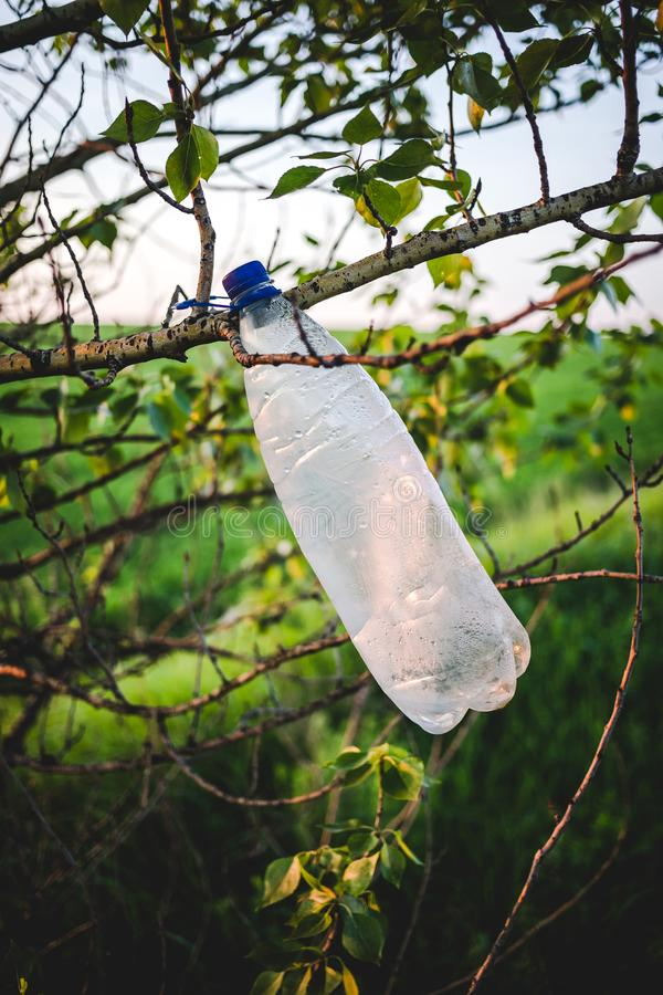 在一棵树的空的塑料瓶在日落 免版税图库摄影