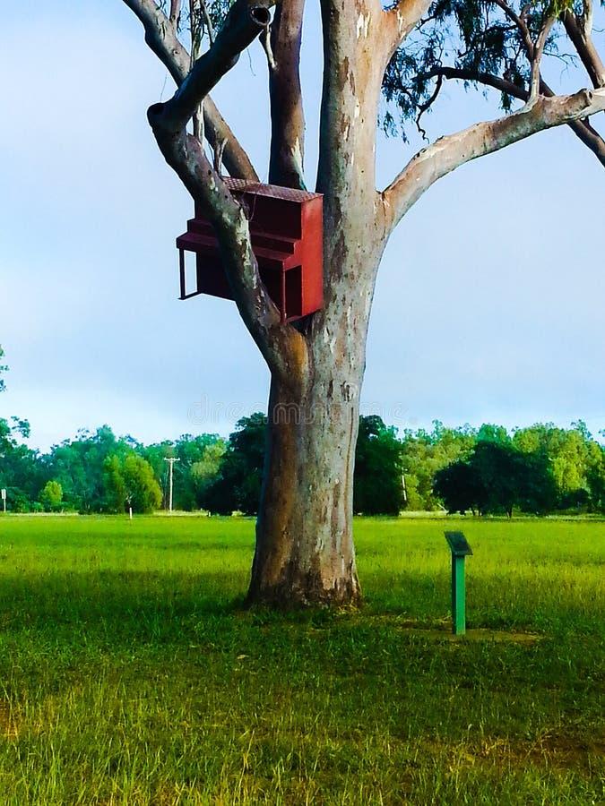 在一棵树的钢琴从洪水 库存照片
