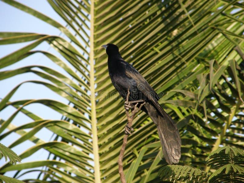 在一棵树的鸟在密林 免版税库存照片