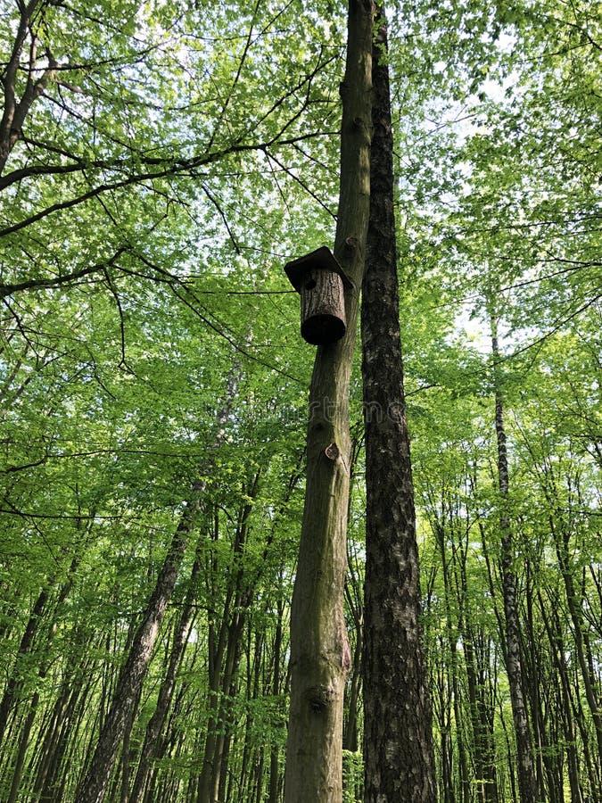 在一棵树的鸟舍在春天在森林里 免版税库存图片