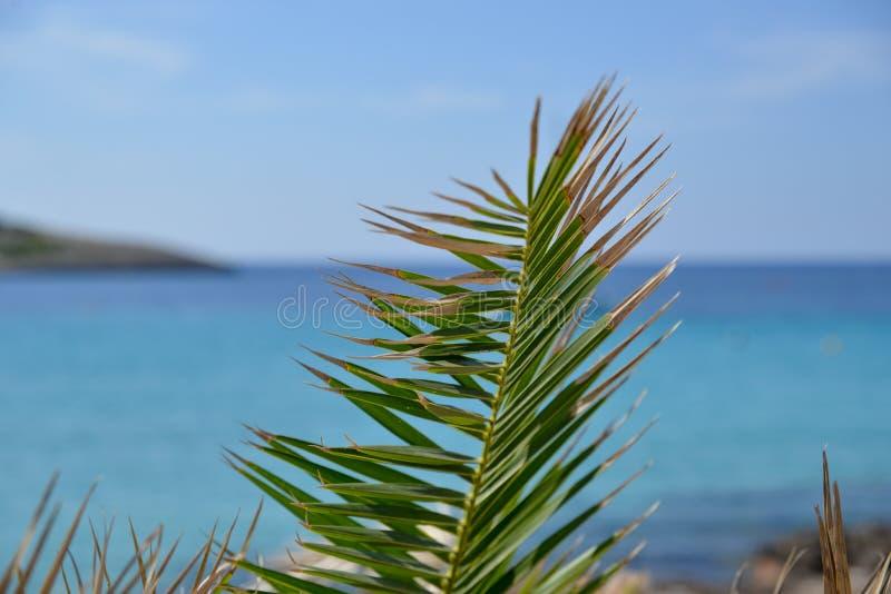 在一棵植物的钉在与后边清楚的蓝色海洋的一个夏日 图库摄影