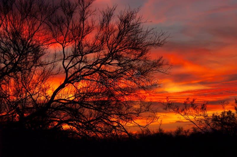 在一棵现出轮廓的豆科灌木树后的五颜六色的日落 图库摄影