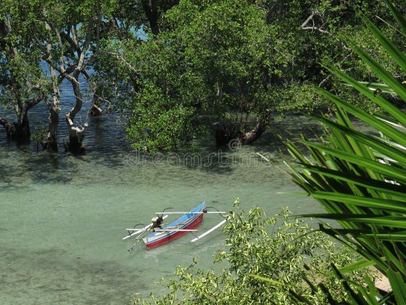 在一棵美洲红树的传统Jukung渔船在Bunaken海岛,北部苏拉威西岛,印度尼西亚 图库摄影