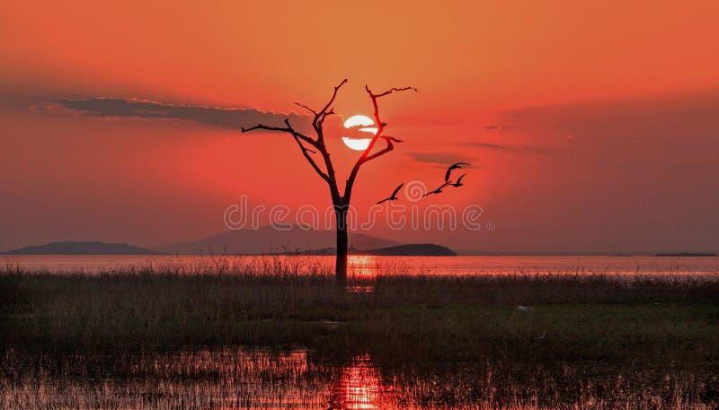 在一棵老死的光秃的树后的美好的橙色日落在卡里巴水库,津巴布韦 免版税库存图片