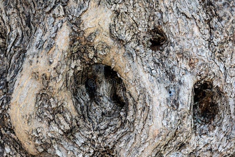 在一棵落叶树的一个有趣的凹陷 图库摄影