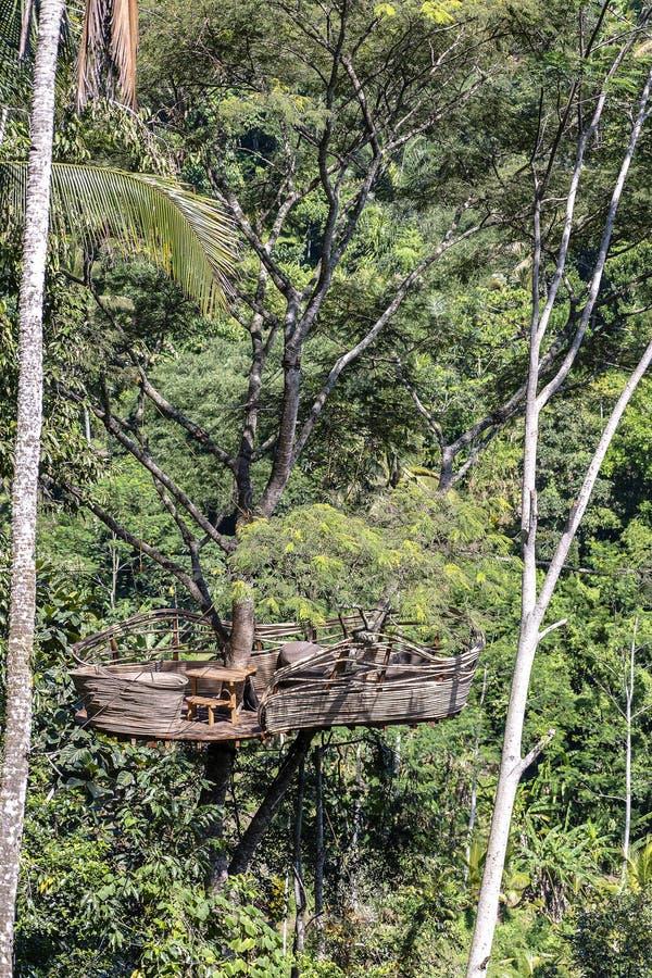 在一棵高热带树的极端度假区在米大阳台附近的密林在海岛巴厘岛,印度尼西亚 库存图片