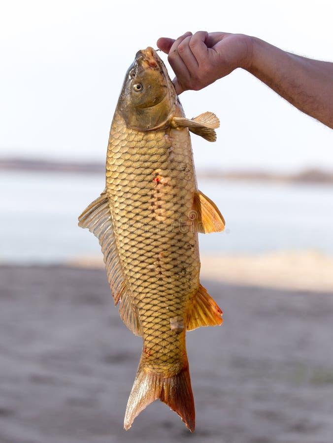 在一次钓鱼的鱼曲奇饼 免版税库存照片