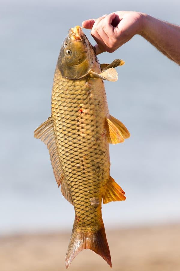 在一次钓鱼的鱼曲奇饼 库存图片