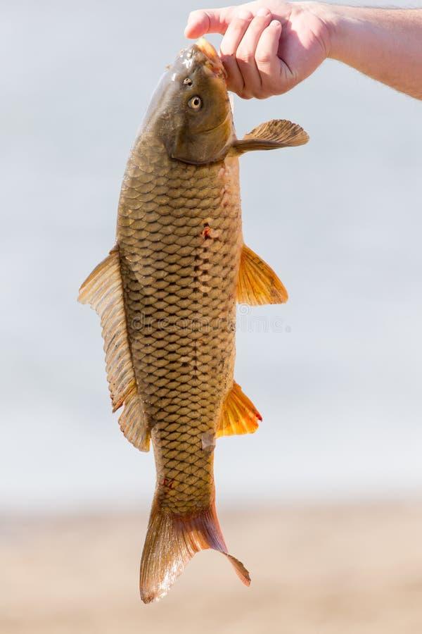 在一次钓鱼的鱼曲奇饼 库存照片