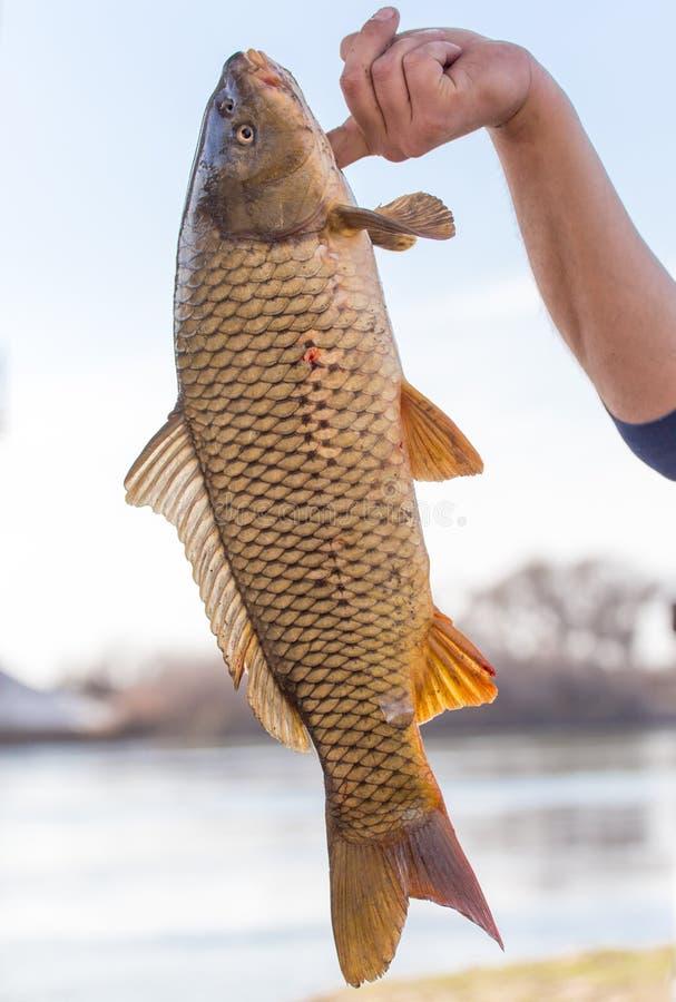 在一次钓鱼的鱼曲奇饼 免版税图库摄影