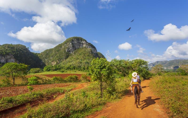 在一次马游览中的游人在Vinales国立公园,联合国科教文组织,比那尔德里奥省,古巴 图库摄影