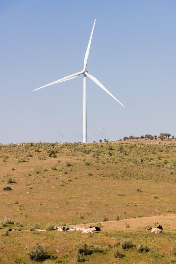 在一清楚的天空蔚蓝的风车在山脉在一个草甸旁边的del Merengue有母牛的在普拉森西亚 免版税库存照片