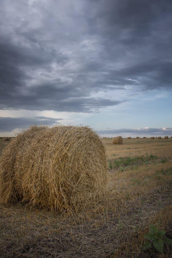 在一片农田在阴云密布,在雨以后的阴沉的天的滚动的麦子 库存照片