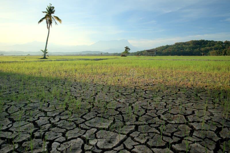 在一片干稻田的破裂的土壤 有与kinabalu婆罗洲,沙巴背景登上的棕榈树  免版税库存图片