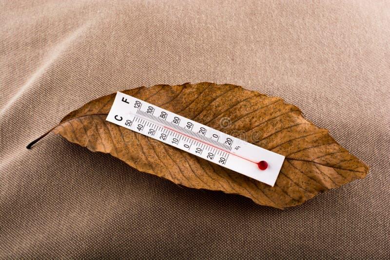 在一片棕色干燥叶子安置的温度计 库存图片