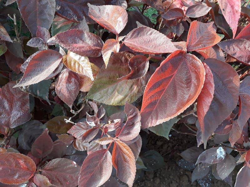 在一片精密浅褐色的叶子的一个轻目的轻的场面 库存图片