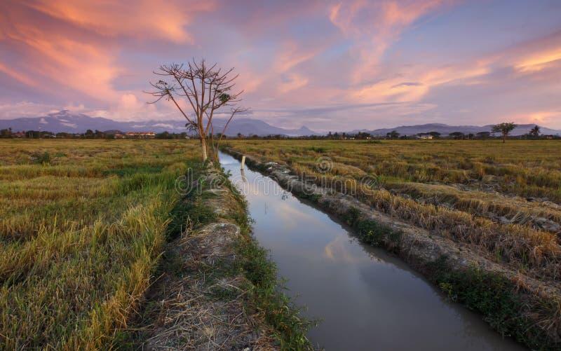 在一片草地的日落在哥打贝卢,沙巴,马来西亚 免版税图库摄影