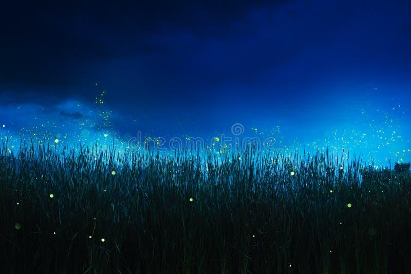 在一片草地的萤火虫在晚上 图库摄影