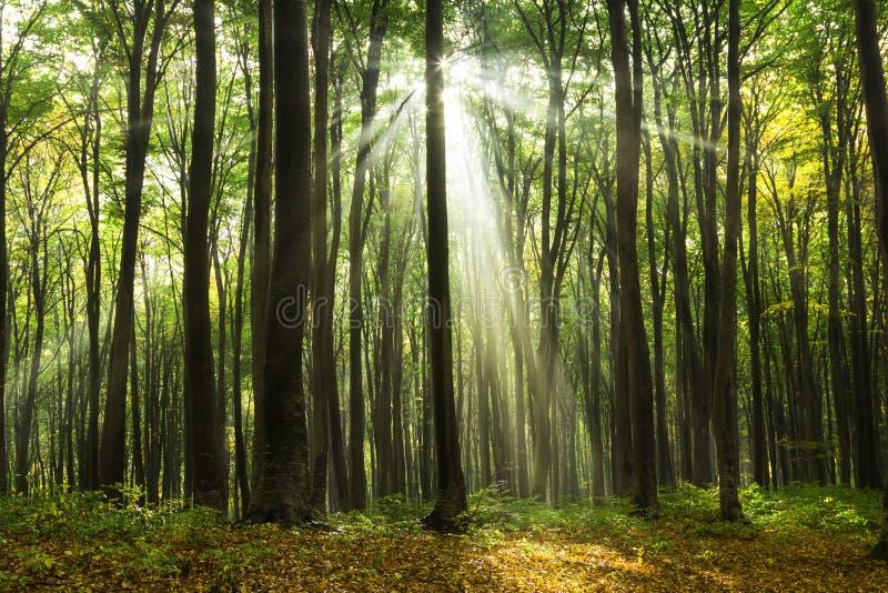 在一秋天天期间,太阳发出光线来通过树 库存照片