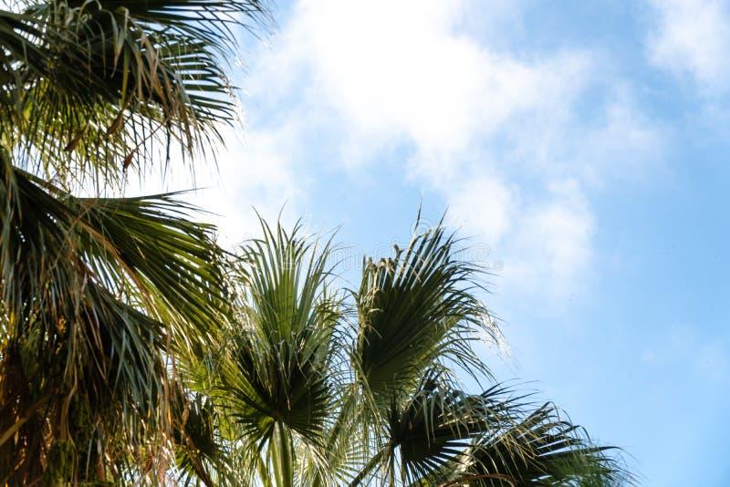 在一种热带手段的棕榈树在美好的好日子 热带假期和晴朗的幸福的图象 混乱构思设计 免版税库存照片