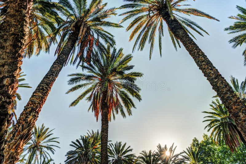 在一种热带手段的棕榈树美好的晴天 免版税图库摄影