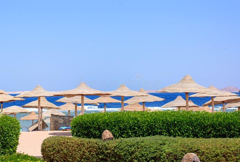 在一种热带手段的盖的沙滩伞 库存照片