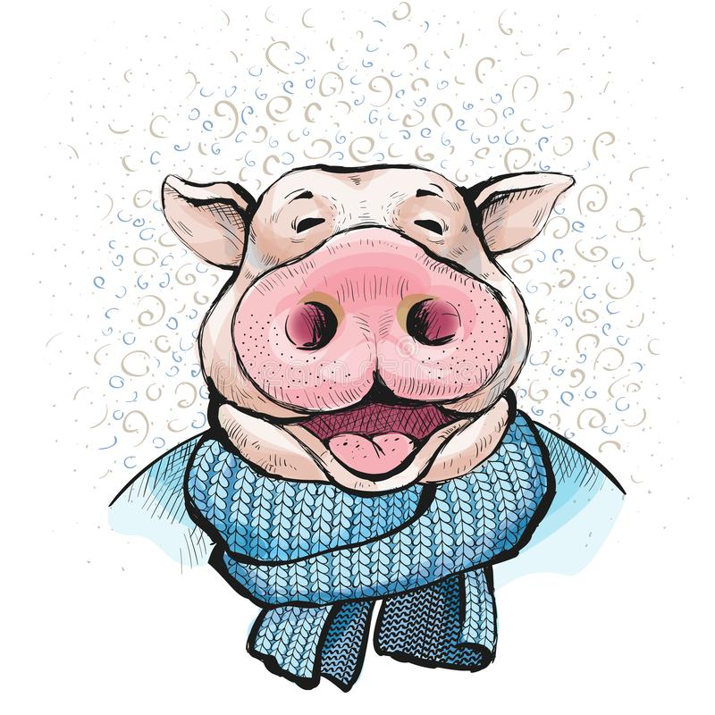 在一种被编织的围巾蓝色颜色包裹的公猪 库存例证