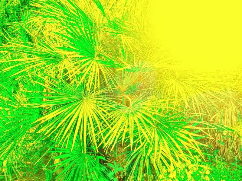 在一种黄色颜色曝光过度的棕榈叶的样式 图库摄影