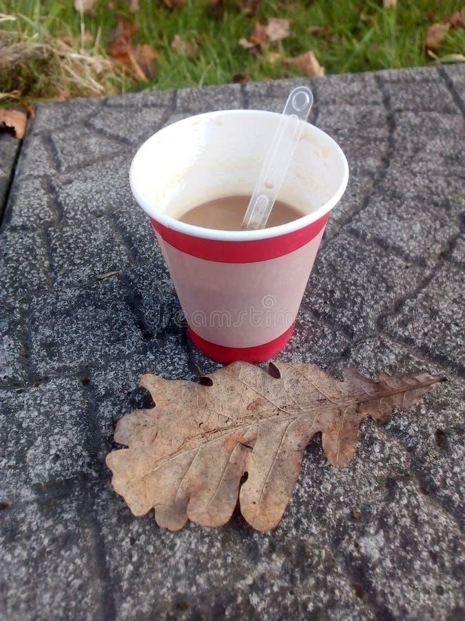在一纸杯的咖啡露天站立凝结面上,在秋天橡木叶子旁边 图库摄影