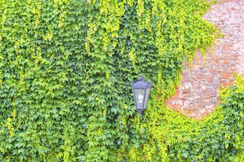 在一老bulding的常春藤 与古典照明设备的浪漫都市风景 免版税库存图片