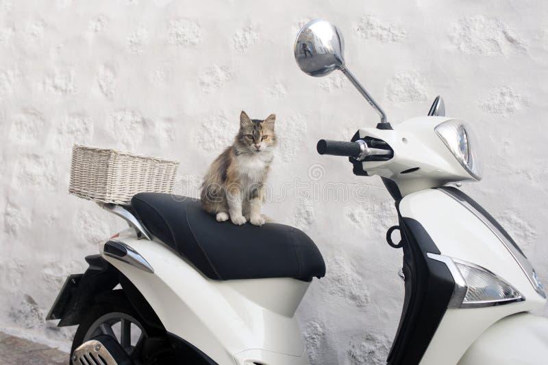 在一辆滑行车顶部的一只街道猫在拔摩岛,希腊海岛  免版税库存照片
